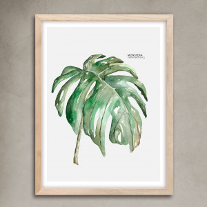 30x40Botanicas-Monstera