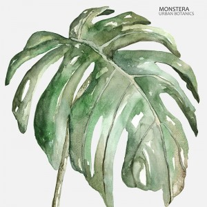 Botanico Monstera