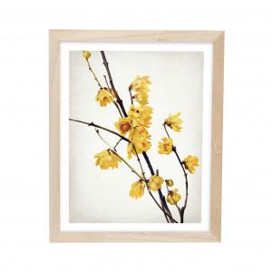 Cuadros flores botanicas