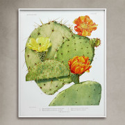 CactusFlor-XXXIV